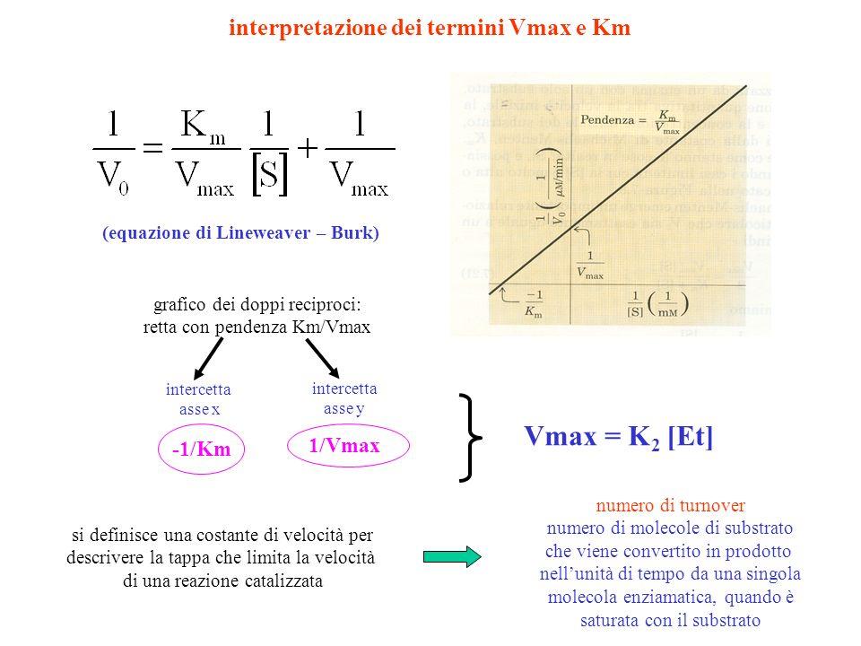 Vmax = K2 [Et] interpretazione dei termini Vmax e Km 1/Vmax -1/Km